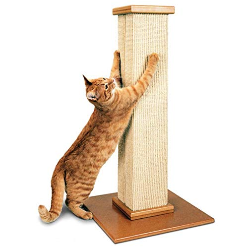 best cat scratcher post