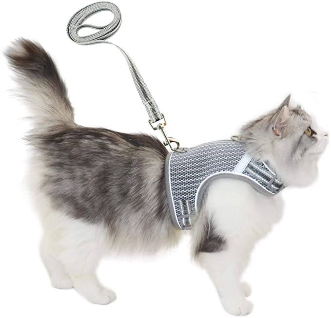 Cat harness with buckles